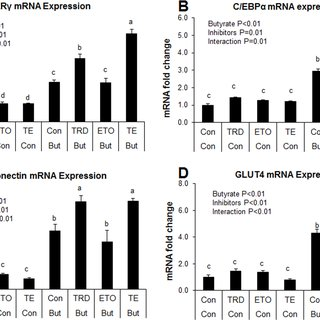 Effects of butyrate on AMPK activation in adipocytes