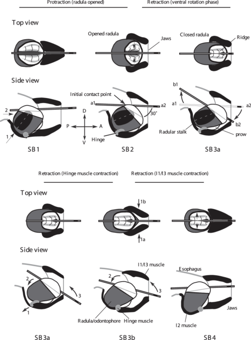 small resolution of i4 engine diagram