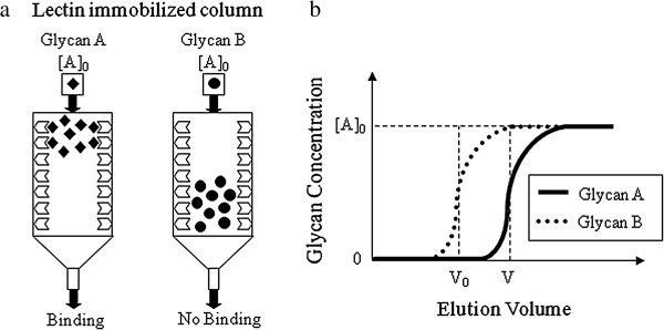 Frontal affinity chromatography for the quantification of