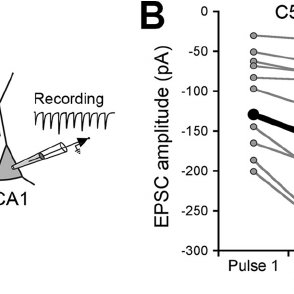 Paired-pulse ratio is affected in DBA mice. A, schematic