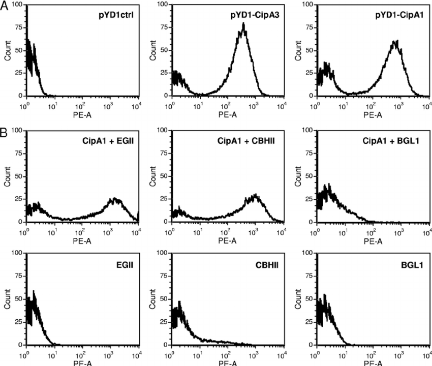Yeast Surface Display of Trifunctional Minicellulosomes