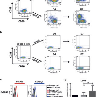(PDF) Phorbol myristate acetate, but not CD40L, induces