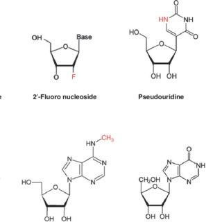 (PDF) Modified mRNA as an alternative to plasmid DNA (pDNA