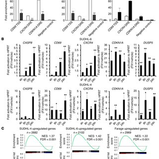(PDF) Rationally designed BCL6 inhibitors target activated