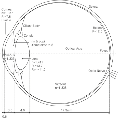Figure 3. Schematic eye model used in computer simulation