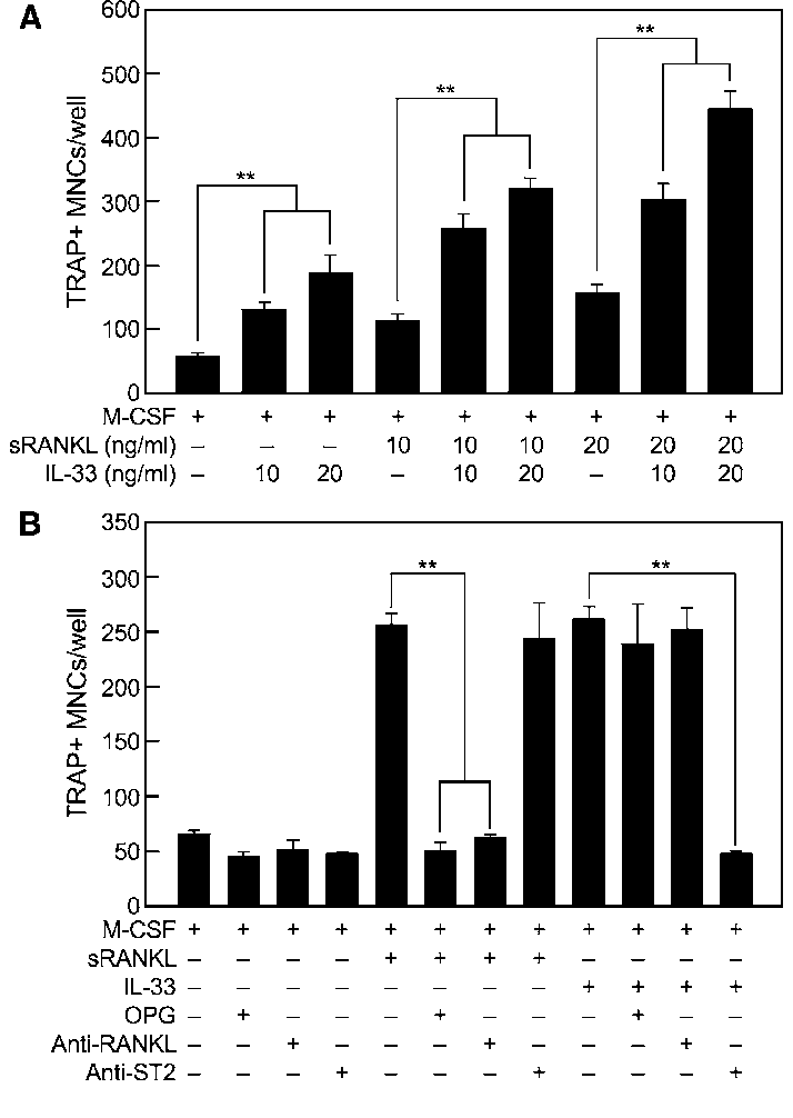 IL-33-induced OC differentiation is enhanced by sRANKL and
