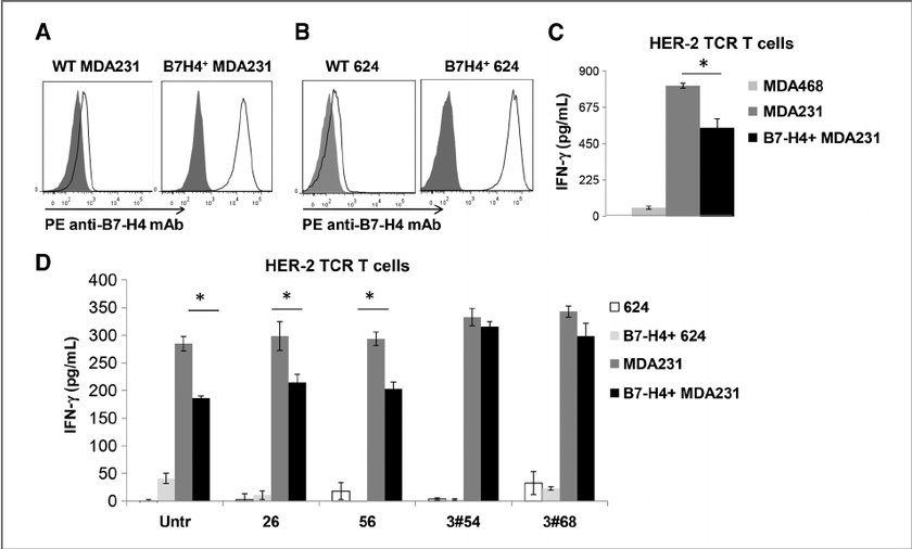 B7-H4 þ HER2 þ tumor cells inhibit HER-2 TCR T-cell