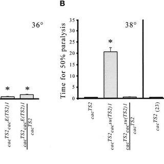 Sec8 is found in the Drosophila NMJ. A: Third instar