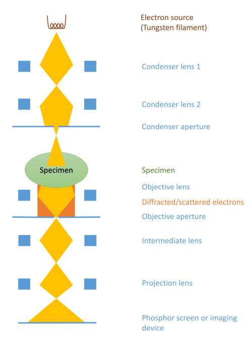 small resolution of 10 a simplified schematic showing the basic components of a typical transmission electron microscope for