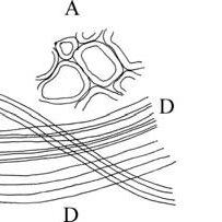 A. Southern blotting procedure. B. Dot blotting does not