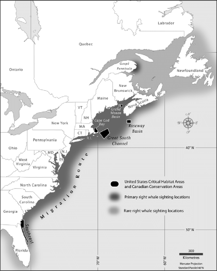 hight resolution of distribution of north atlantic right whale in the western atlantic the figure has been redrawn
