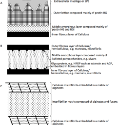 schematic representation of algal cell walls the cell wall composition differs between various algal groups 43 within the charophyta a the wall is  [ 850 x 930 Pixel ]