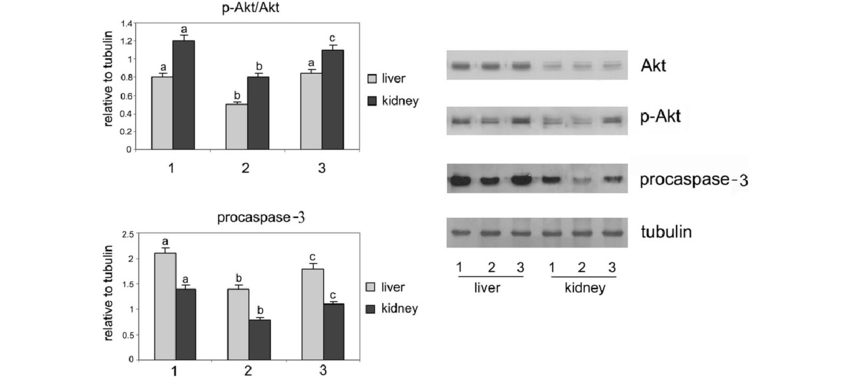 The effects of BGEE administration on the relative protein