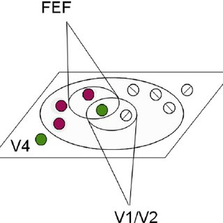 Examples of Transformations in V4 (A) Color: color