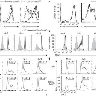 (PDF) GATA-3 controls T cell maintenance and proliferation