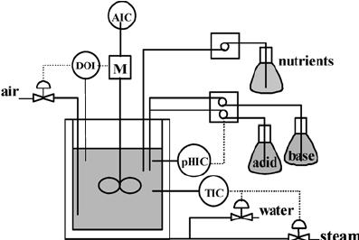 Fed-batch fermentation process of B. thuringiensis