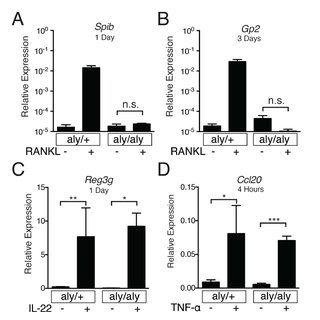 TNF-α does not induce Spib expression in RANK∆IEC