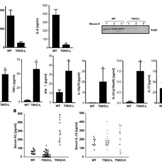 Deletion of TLR4 ablates colitis in TLR5KO mice. Twelve