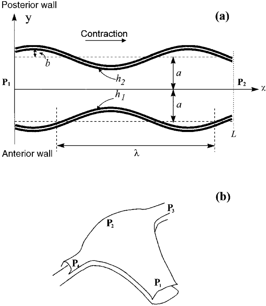 hight resolution of  a schematic description of a uniform two dimensional channel with oscillating walls
