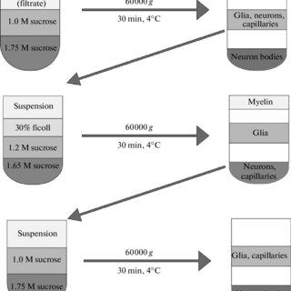A) glutathione peroxidase (GPX) was measured in controls