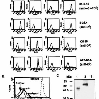 NKG2D pairs with DAP12 in activated CD8 T cells. Western