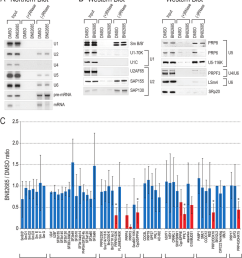 a ninety minute in vitro splicing reactions of biotin labeled ad2 pre mrna containing either dmso or 20 m bn82685 were incubated with streptavidin coated  [ 850 x 947 Pixel ]