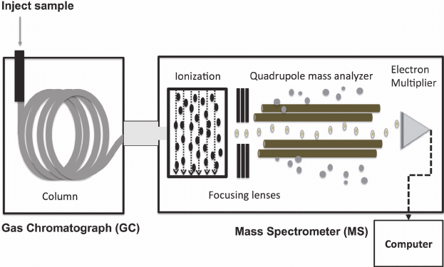 schematic diagram of mass spectrometer receptacle wiring a gas chromatography quadrupole gc ms