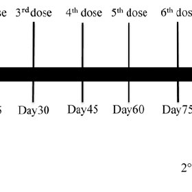 Vaccination schedule. patient received 6 consecutive doses