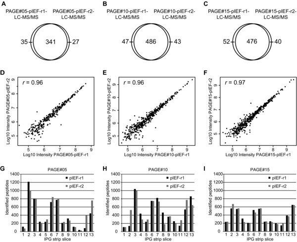Overlap of identified proteins across replicate pIEF