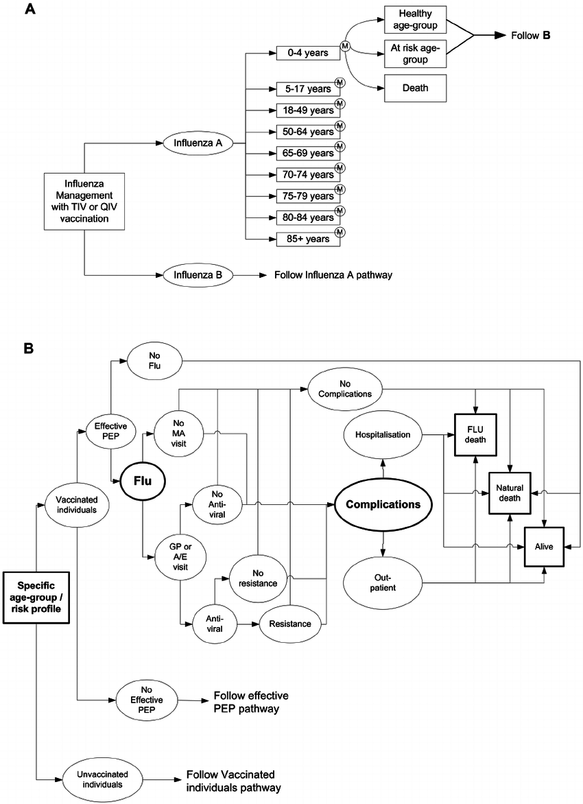 A: Overview of model structure; B: Overview of possible
