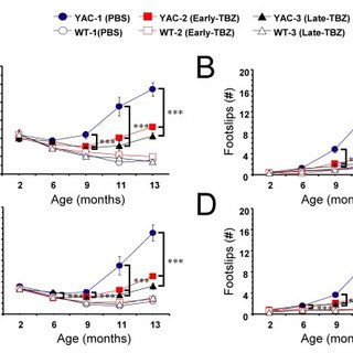 Gait analysis of WT and YAC128 mice. A, The footprint