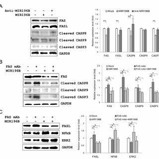 qRT-PCR analysis of miRNA expression in tissues and cells
