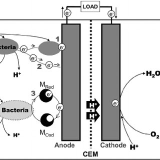 Schematic diagram of hydrogen production through the