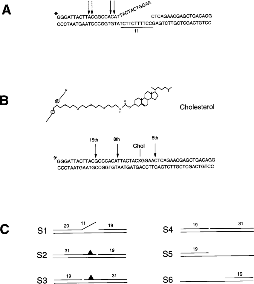 hight resolution of the 50 base pair dna substrates used in this study a dna sequence