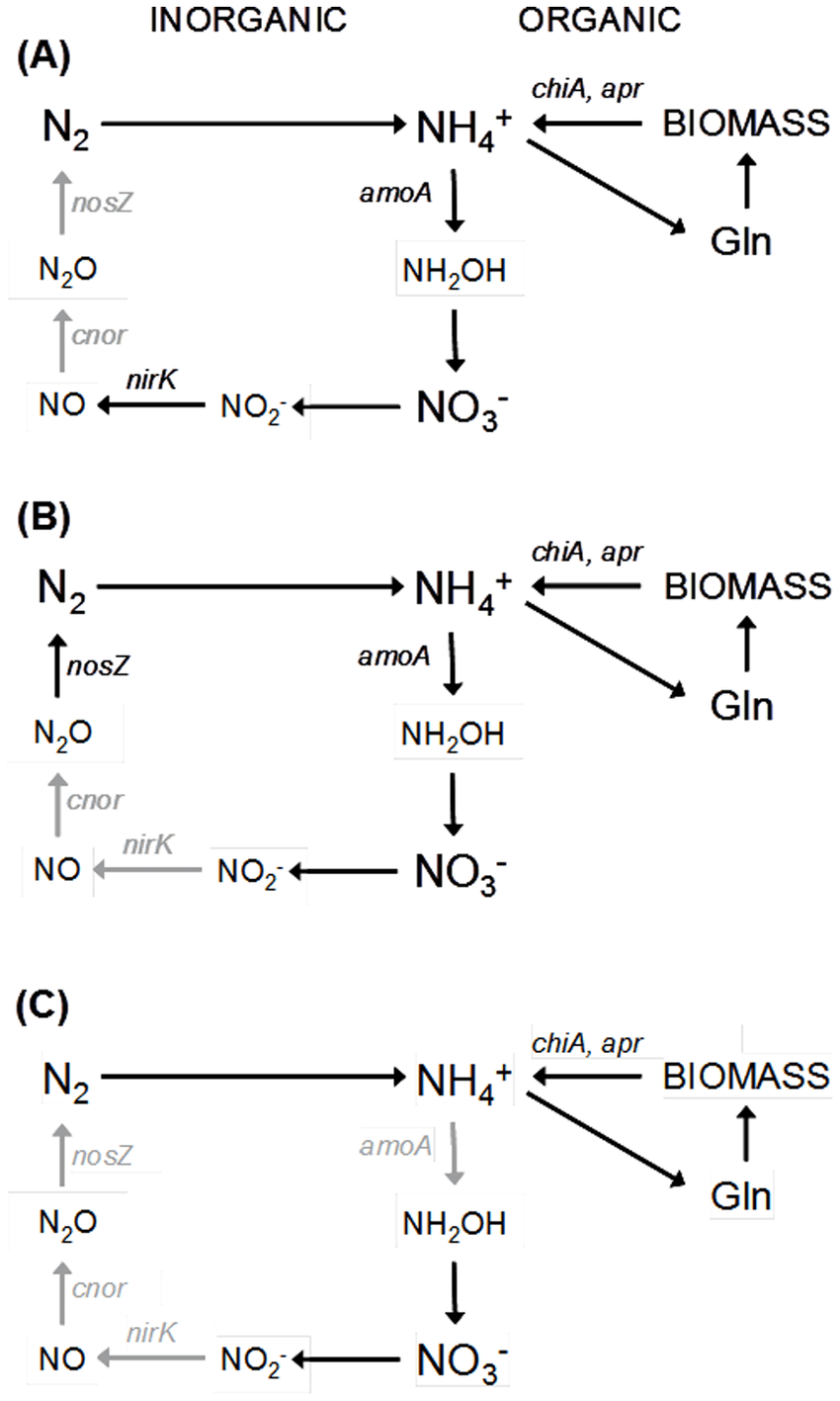 hight resolution of scheme of the microbial nitrogen cycle under different climate change conditions a comparison