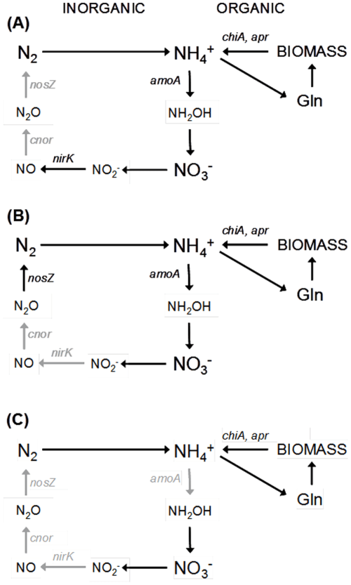 small resolution of scheme of the microbial nitrogen cycle under different climate change conditions a comparison