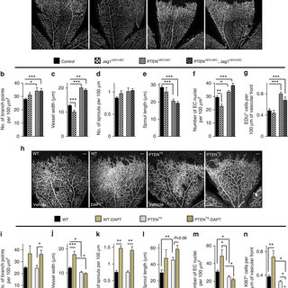 (PDF) PTEN mediates Notch-dependent stalk cell arrest in