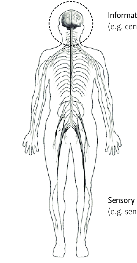 3-SHM analogy with the human nervous system [38