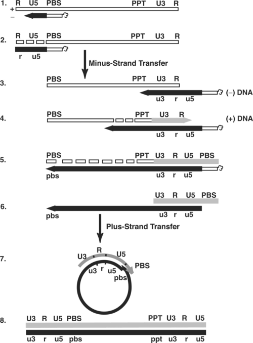 small resolution of schematic diagram of the events in reverse transcription step 1 reverse transcription is initiated