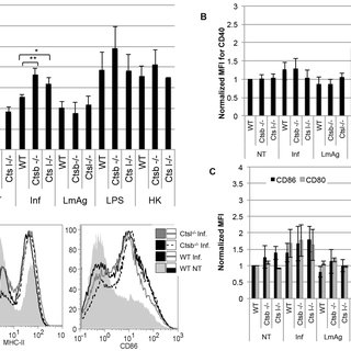 (PDF) Cathepsin B in Antigen-Presenting Cells Controls