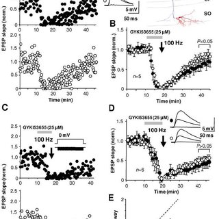 Long-term potentiation in O-LM interneurons is induced at