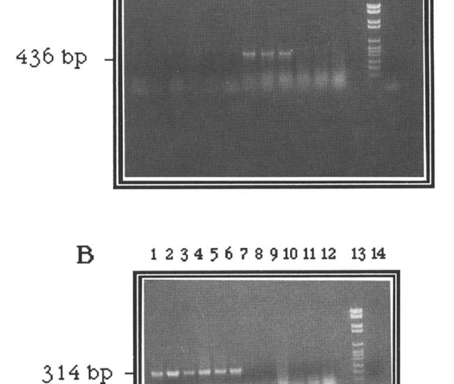 Pcr Test With Primers From Antigen A Sequences Specific For Mdv 1 Or Hvt Virus Dna Which Allow The Specific Detection Of Mdv I Or Mdv 3