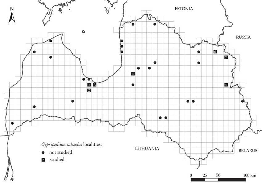 Distribution of Cypripedium calceolus in Latvia within a