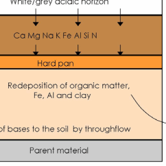 Horizon Diagram Soil Formation Are Truck Cap Parts Forming Processes Of A Typical Podzol Threats To Valuable Heathland Features