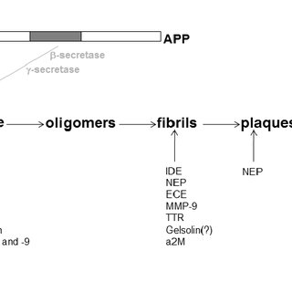 Schematic diagram depicting APP processing: key proteins