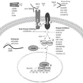 (PDF) TGF-beta Signaling in Cancer Treatment