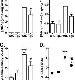 formation of ros markers in urine and tissue from wild type and transgenic glo  [ 800 x 1107 Pixel ]
