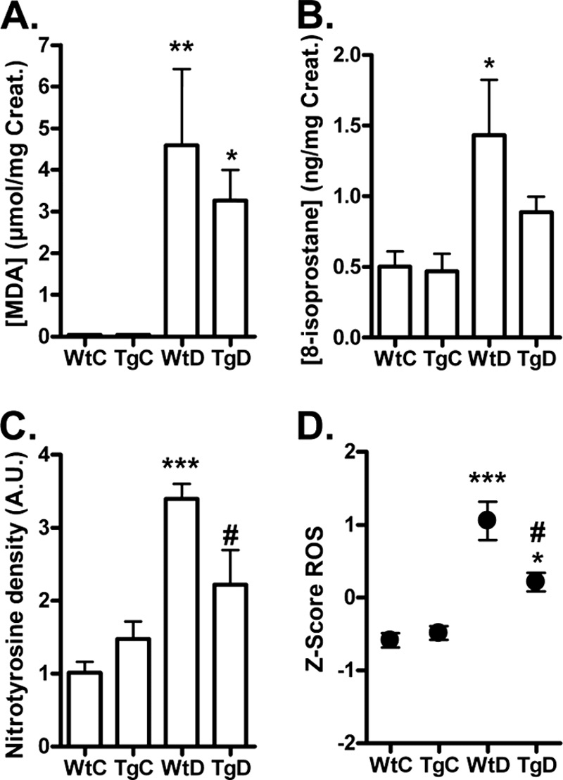 hight resolution of formation of ros markers in urine and tissue from wild type and transgenic glo