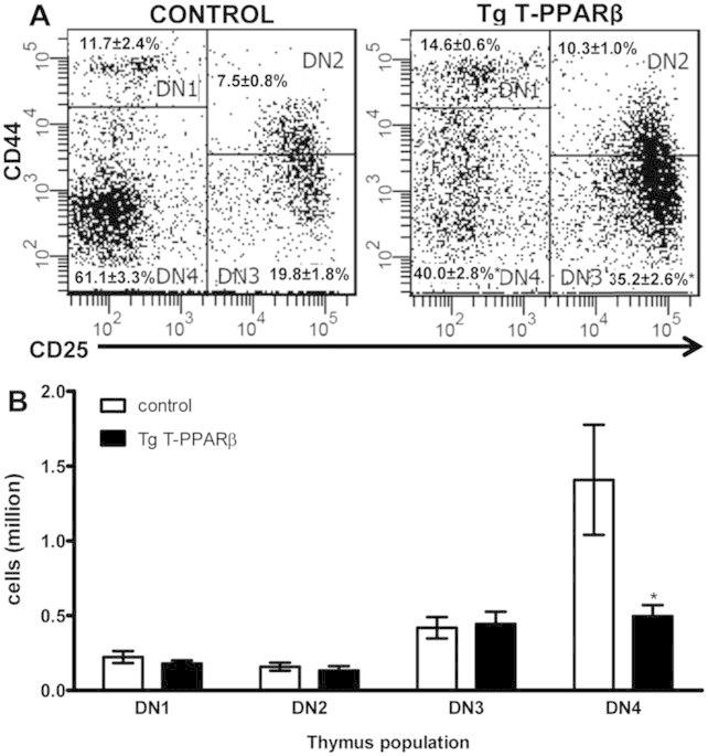 Thymic T cell development is impaired at the DN4 stage in