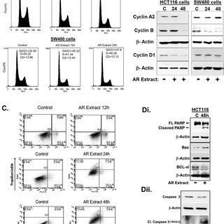 AR extract inhibits Wnt/β-catenin and Notch signaling